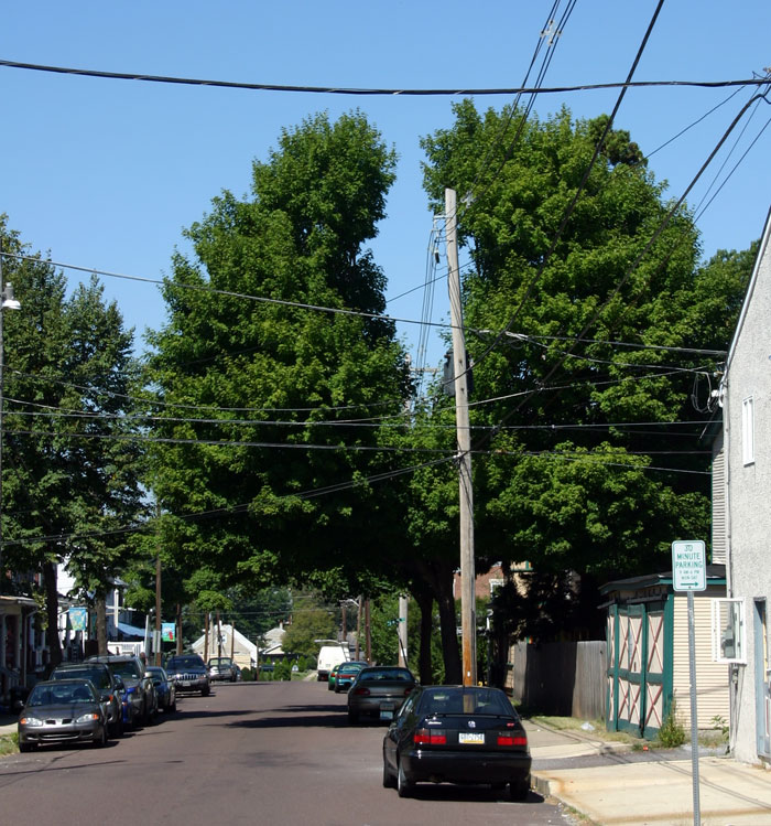 Planting Trees Around Power Lines : Trees can grow around bundled wires