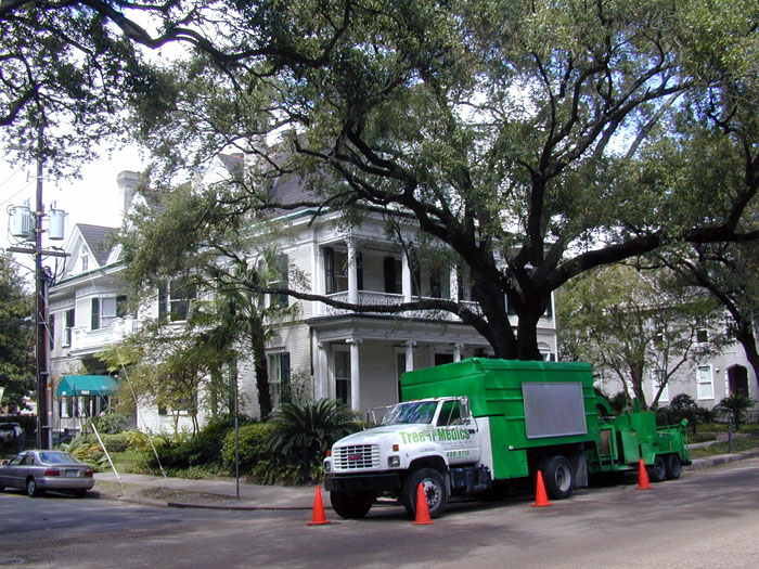 H2-hylton-trees-new-orleans